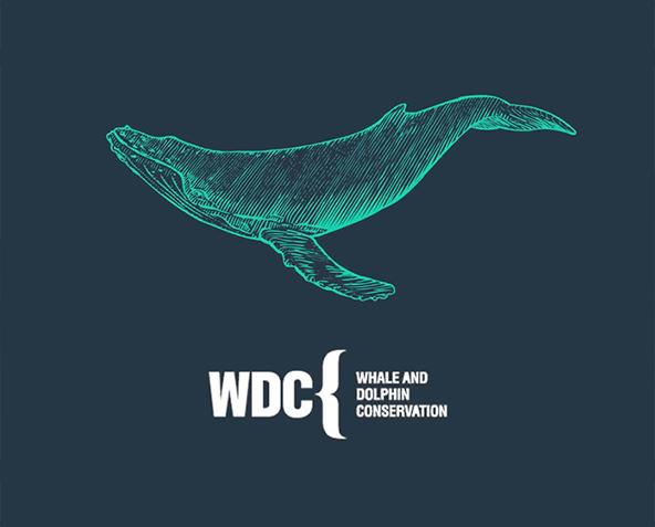 WDC - PUPA Milano